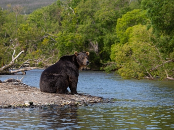 Bear hunting and fishing in Kamchatka / Russia