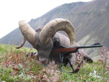 Snow sheep hunting in Kamchatka/Russia