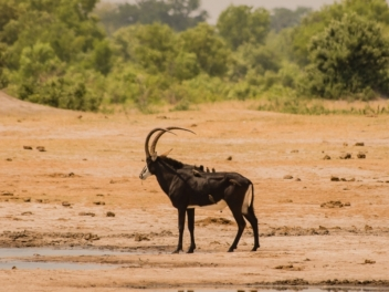 Buffalo & Plains Game Safari in Mozambique